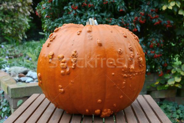 Big Thanksgiving pumpkin in an autumn garden Stock photo © sarahdoow