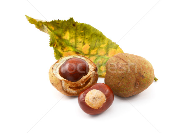 Conkers and smooth seed cases with red horse chestnut leaf Stock photo © sarahdoow