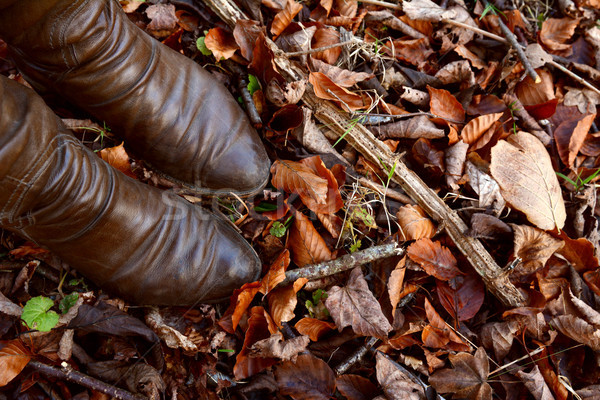 Woman's brown leather boots among autumn leaves and dead wood Stock photo © sarahdoow