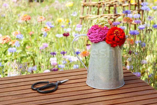 Scissors next to a rustic jug holding freshly cut zinnias Stock photo © sarahdoow