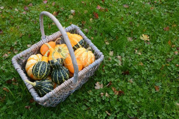 Basket full of attractive ornamental squash Stock photo © sarahdoow