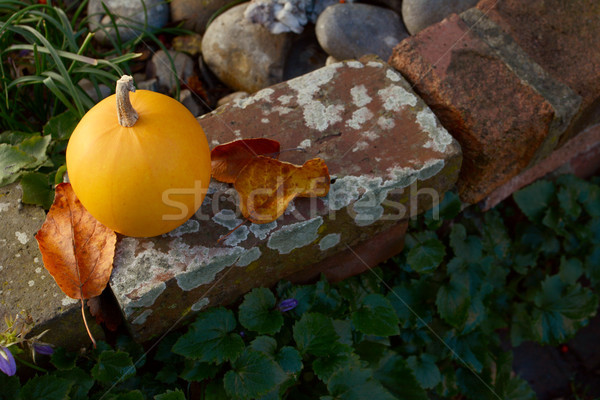 Autumn leaves and orange gourd on weathered brick wall Stock photo © sarahdoow