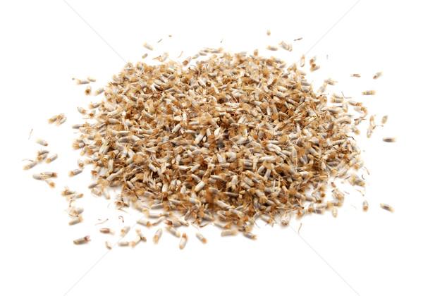василек семян изолированный белый Сток-фото © sarahdoow