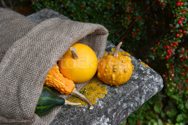 Warty ornamental gourd with jute sack of colourful squashes Stock photo © sarahdoow