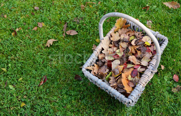 Woven basket of fall leaves on grass Stock photo © sarahdoow