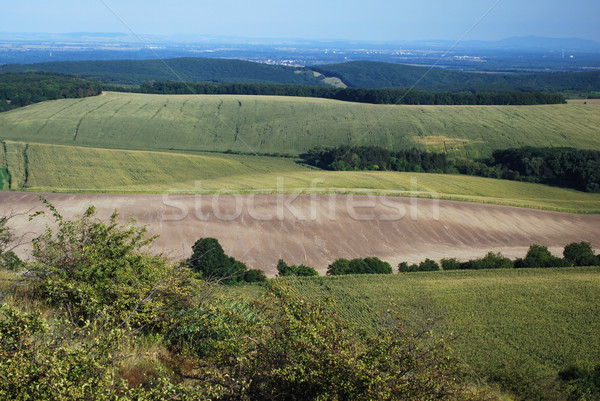 czech landscape Stock photo © Sarkao