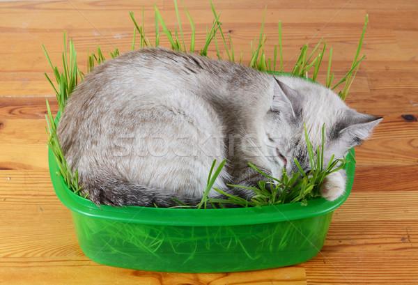 котенка спальный трава природы зеленый Сток-фото © Sarkao