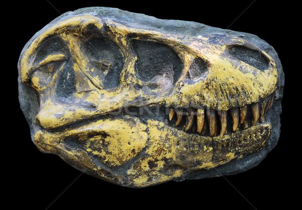 tyrannosaurus rex head with clipping path  Stock photo © Sarkao