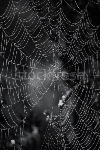 Teia da aranha natureza luz teia outono cair Foto stock © Sarkao