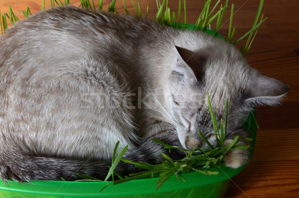 Kedi yavrusu uyku çim doğa yeşil Stok fotoğraf © Sarkao
