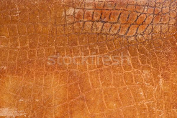 crocodile leather Stock photo © Sarkao