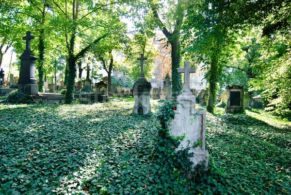 кладбище крест деревья растений Европа религии Сток-фото © Sarkao