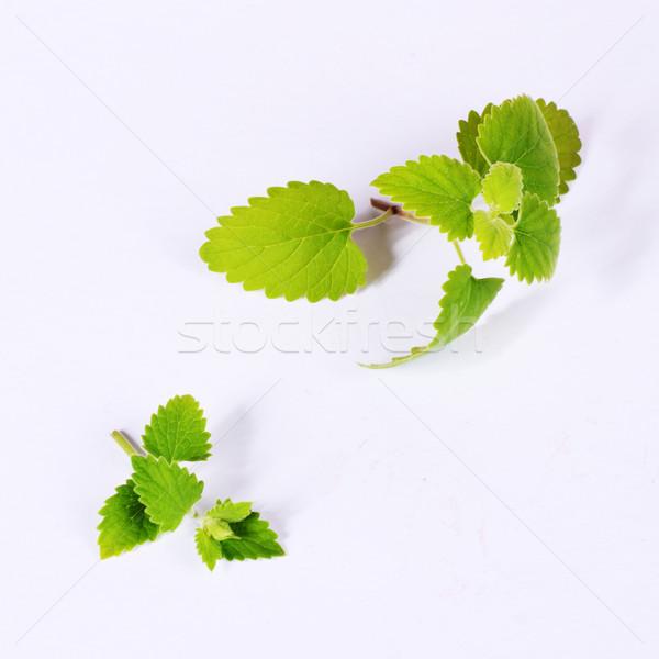 Stok fotoğraf: Yeşil · yaprakları · taze · ilaç