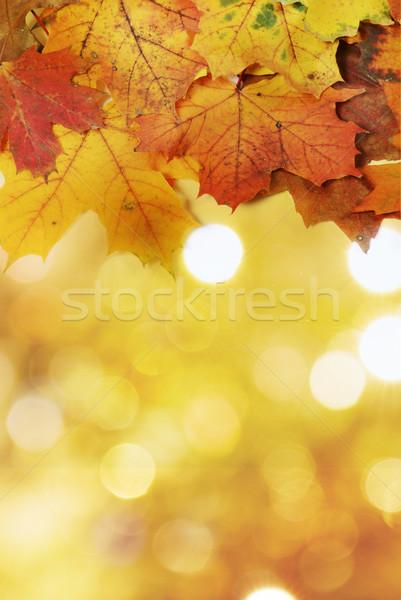 Akçaağaç yaprakları doğa yaprak turuncu kırmızı Stok fotoğraf © Sarkao