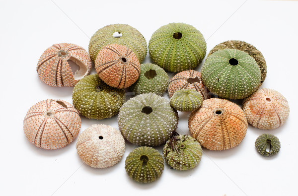 sea urchins Stock photo © Sarkao