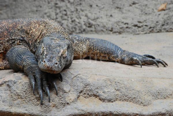 дракон спальный Весы экзотический опасный хищник Сток-фото © Sarkao