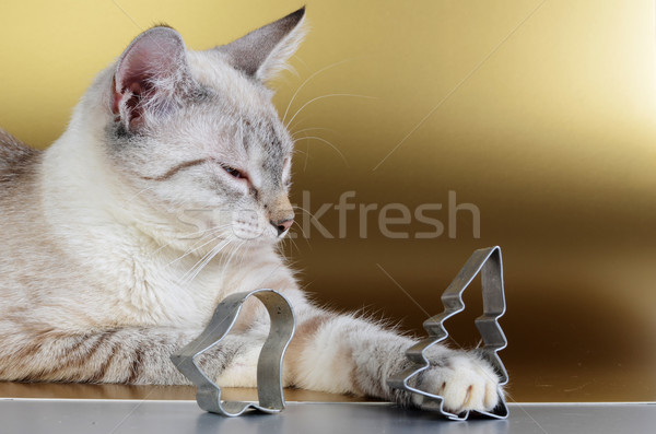 kitten and christmas cookie cutters Stock photo © Sarkao