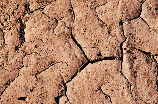 cracked dried ground Stock photo © Sarkao
