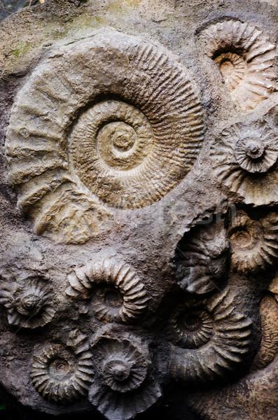 Fosil doku deniz arka plan okyanus hayvan Stok fotoğraf © Sarkao