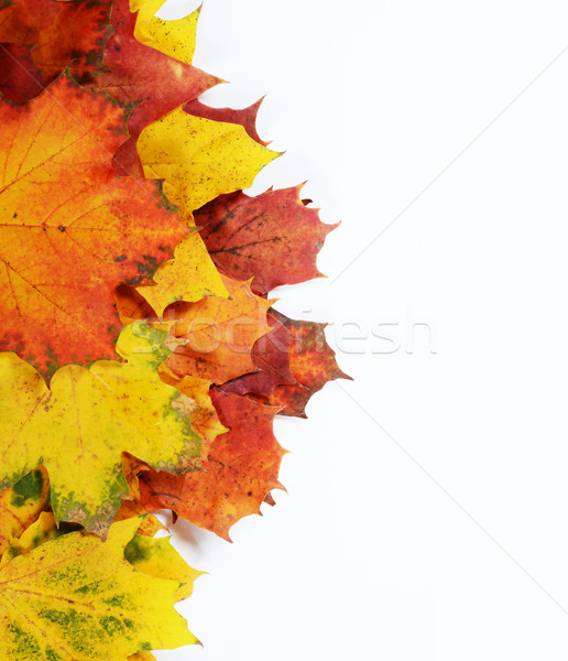 autumn leaves with space for your text Stock photo © Sarkao