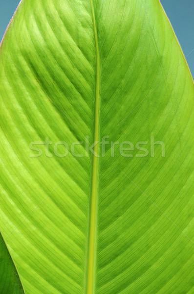 лист структуры природы фон зеленый Сток-фото © Sarkao
