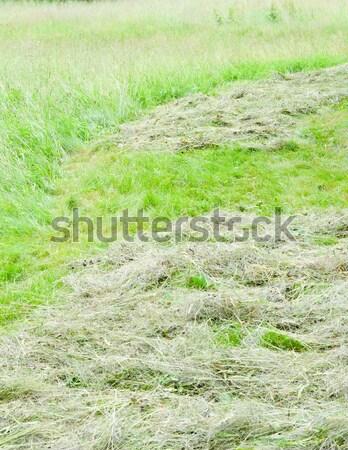 hay Stock photo © Sarkao