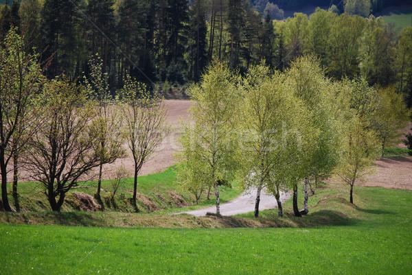 czech landscape Stock photo © Sarkao