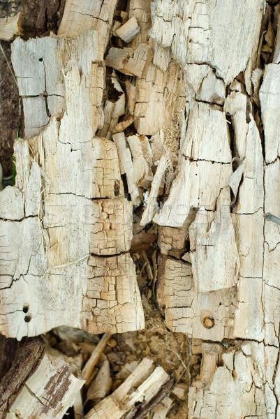 древесины дерево структуры Сток-фото © Sarkao