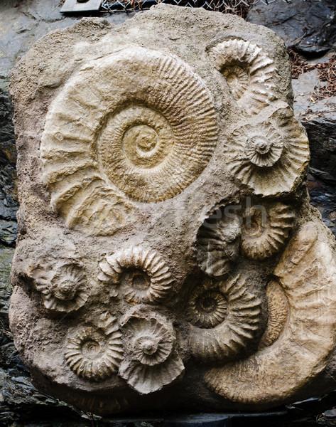 Fóssil textura mar fundo oceano animal Foto stock © Sarkao
