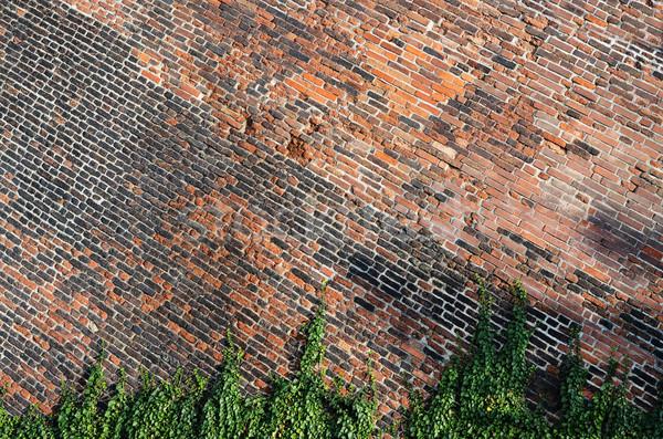 Tuğla duvar sarmaşık doku yeşil bitki Stok fotoğraf © Sarkao