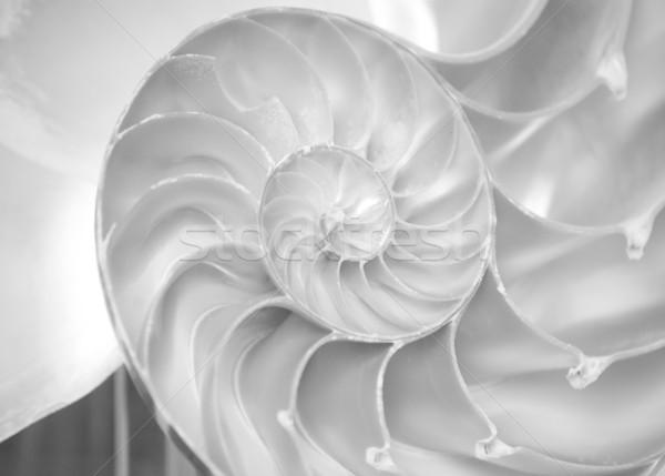 nautilus shell Stock photo © Sarkao