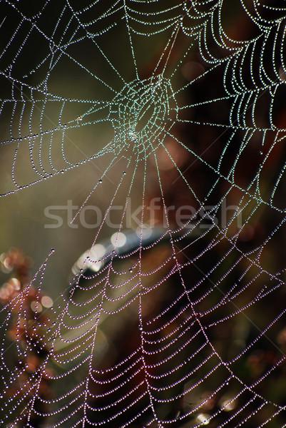 Spider web Stock photo © Sarkao