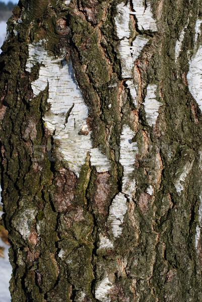 tree skin detail Stock photo © Sarkao