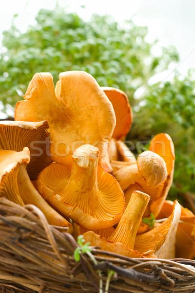chanterelles in basket Stock photo © sarsmis