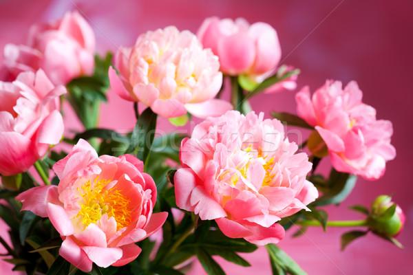 Roze mooie boeket bloem zomer leven Stockfoto © sarsmis