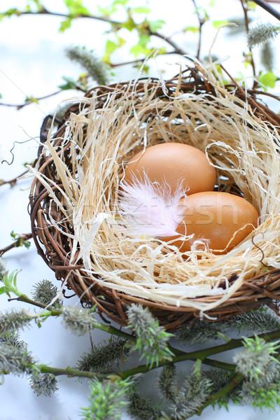 Easter eggs nido piuma Pasqua foglia uovo Foto d'archivio © sarsmis