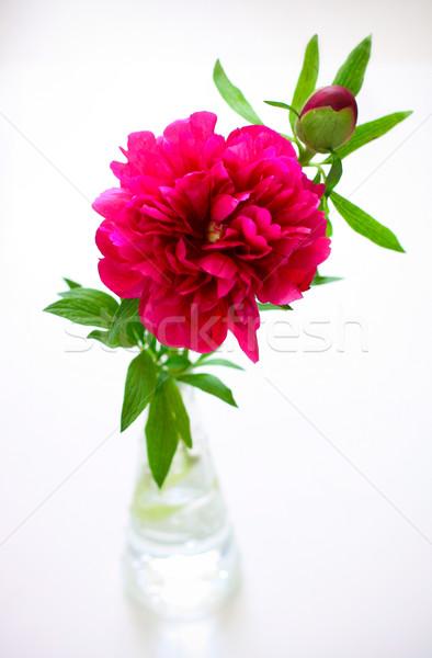 Rózsaszín természet levél üveg kert nyár Stock fotó © sarsmis