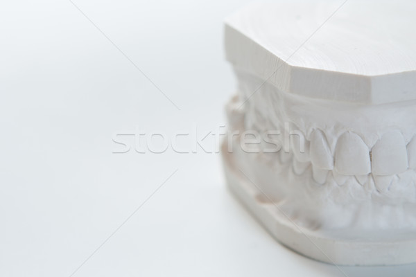 Gypsum model of human jaw on a white background. Stock photo © sarymsakov