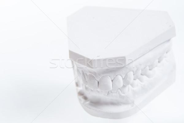 石こう モデル 人間 顎 白 選択フォーカス ストックフォト © sarymsakov