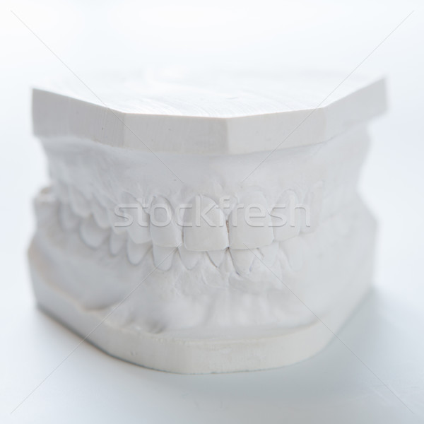 Gypsum model of human jaw on a white background. Stock photo © sarymsakov