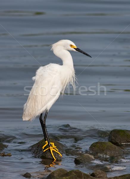 Rotsen water natuur vogel rock meer Stockfoto © sbonk