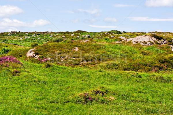 Groene veld hemel kleurrijk blauwe hemel gebruikt Stockfoto © sbonk