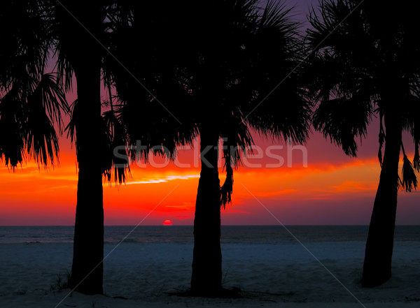 Clearwater Sunset Stock photo © sbonk
