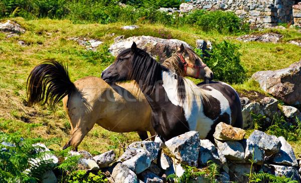 2 草 岩 ファーム 動物 馬 ストックフォト © sbonk
