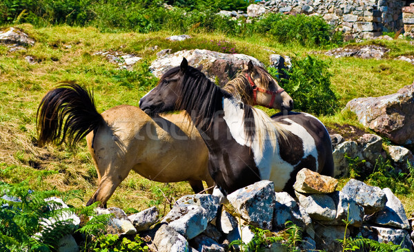 Deux herbe Rock ferme animaux chevaux Photo stock © sbonk
