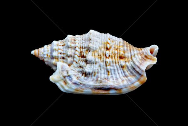 黒 孤立した 自然 ビーチ 海洋 ストックフォト © sbonk