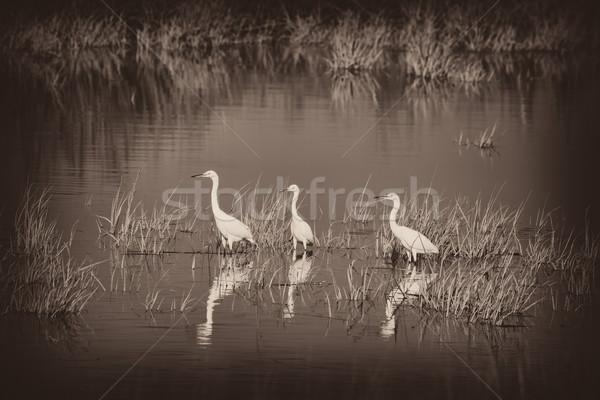 3  水 自然 鳥 湖 鳥 ストックフォト © sbonk