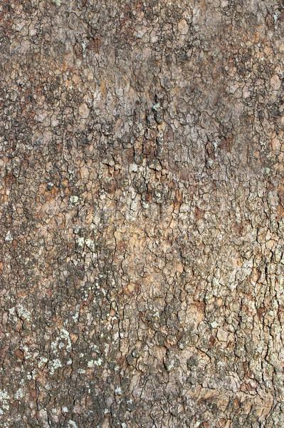 Fa ugatás mutat részletek textúrák minták Stock fotó © sbonk