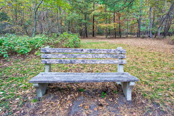 A Bench in the Woods Stock photo © sbonk