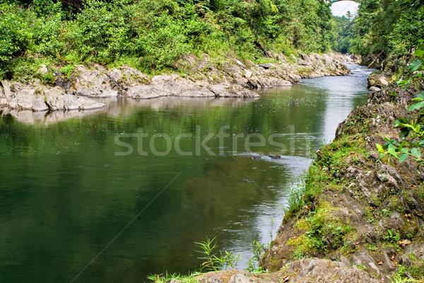 Bodem Vermont rivier boom bos Stockfoto © sbonk